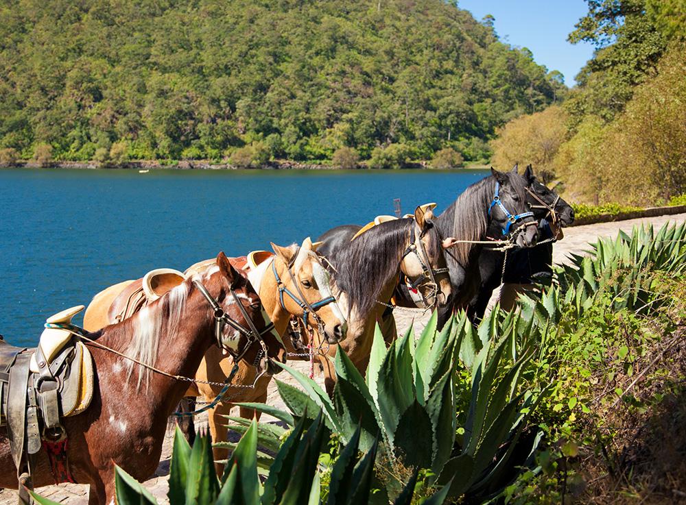 Sierra Lago - Paseo a caballo